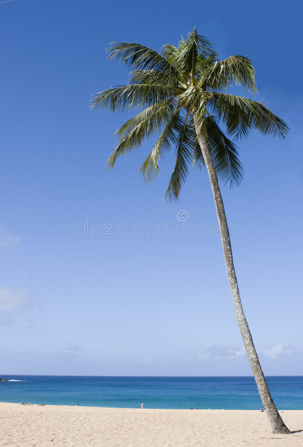 Waimea bay, oahu, hawaii. A quiet clear, blue day at waimea bay, oahu, hawaii royalty free stock photos