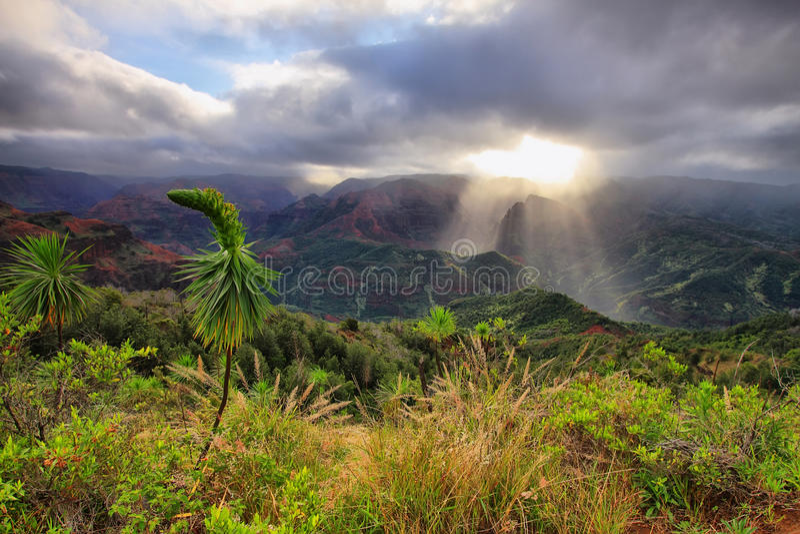 Waimeacanion de Eilanden in van Kauai, Hawaï. stock foto's