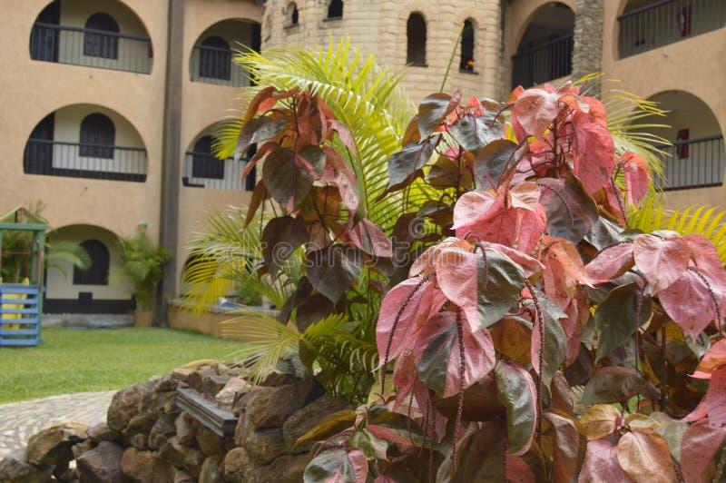Waipa hotel, Guayana miasto Wenezuela zdjęcia royalty free