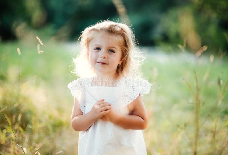 A waist-up portrait of small girl in sunny summer nature. stock images