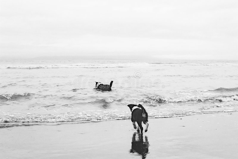 Download Wait For Me, Mum ! stock image. Image of shoreline, water - 115497