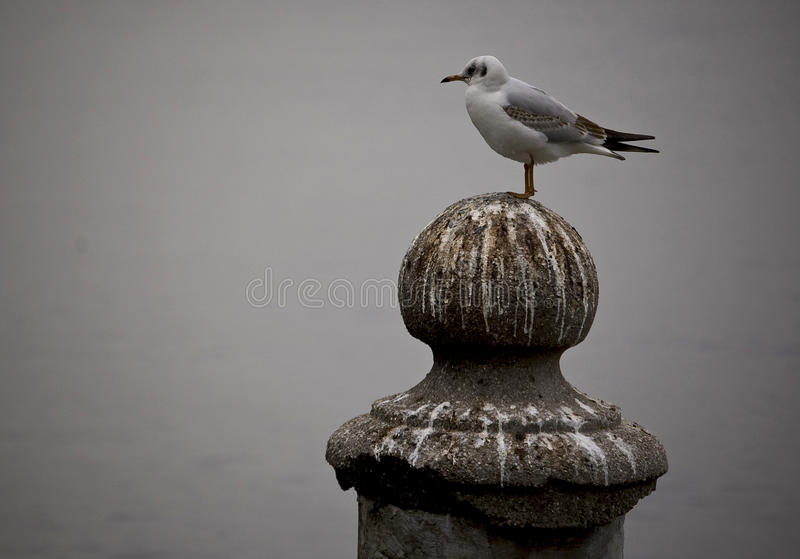 Waiting. A bird on the Garda's lake, italy royalty free stock images