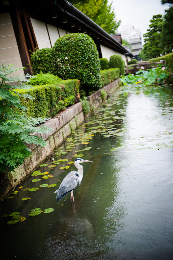 Waiting bird in water royalty free stock photo