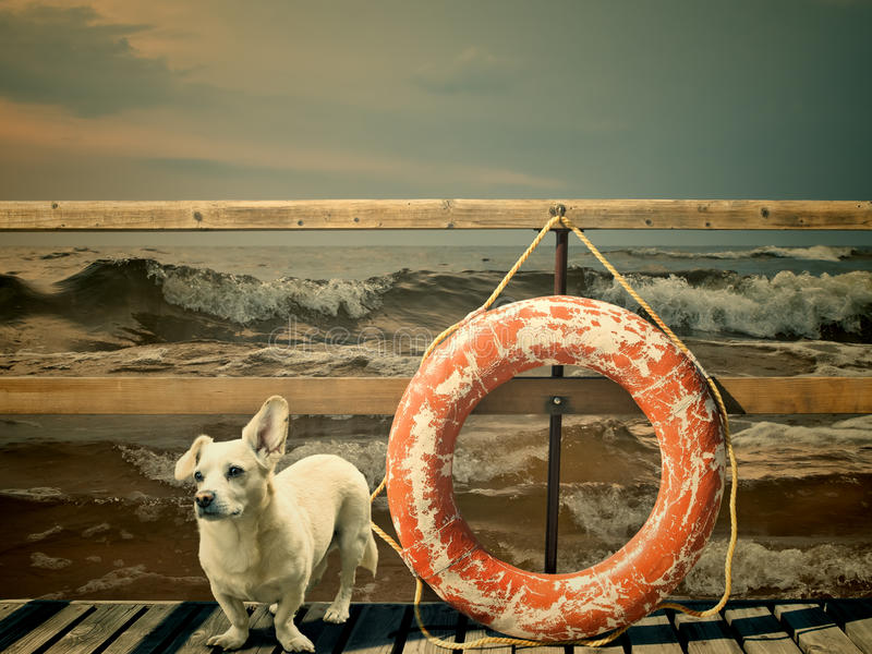 Download Waiting dog stock photo. Image of lifesaver, pier, travel - 22329226