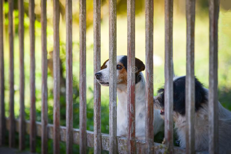 Waiting dogs behind the fence stock photography