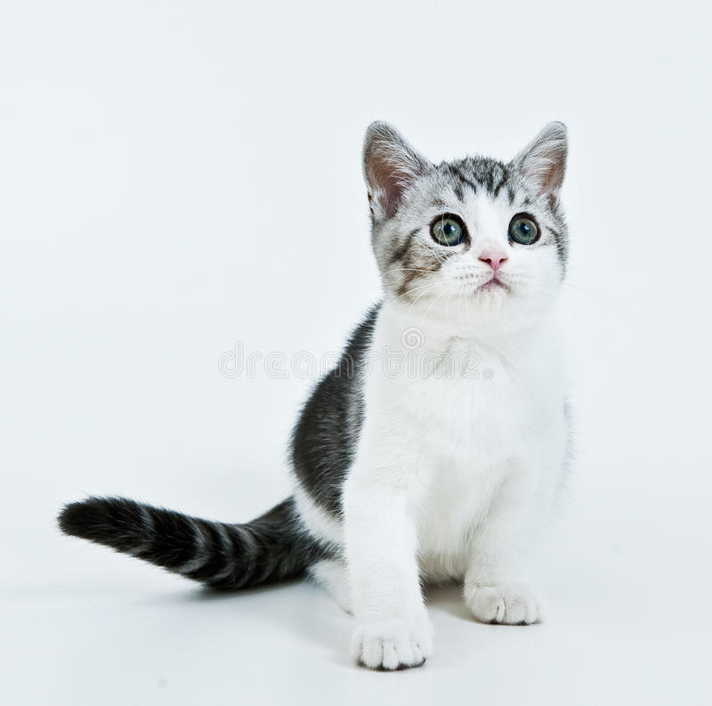 Download Waiting kitten stock image. Image of facial, beauty, eyes - 12139783