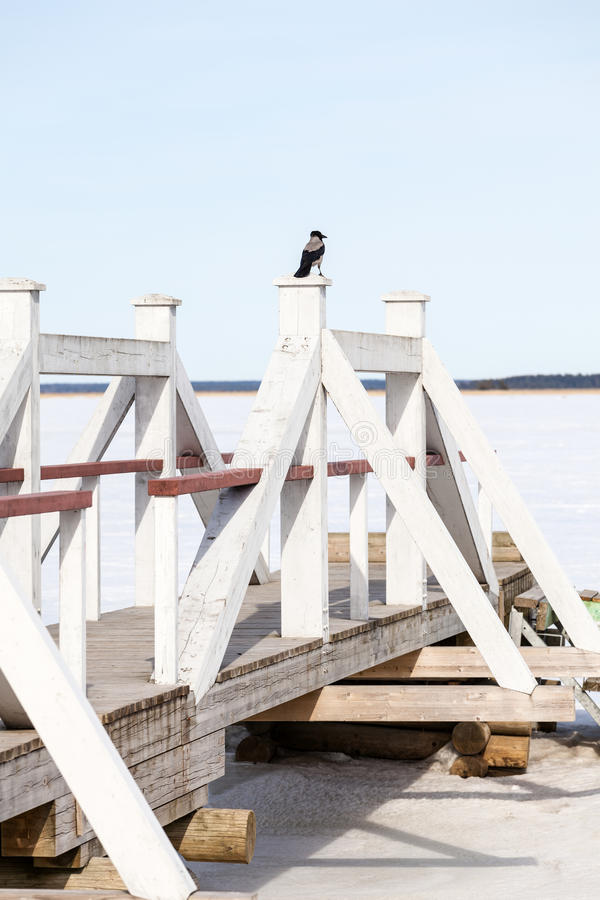 Waiting for the new season. Crow is waiting for the new season royalty free stock photos