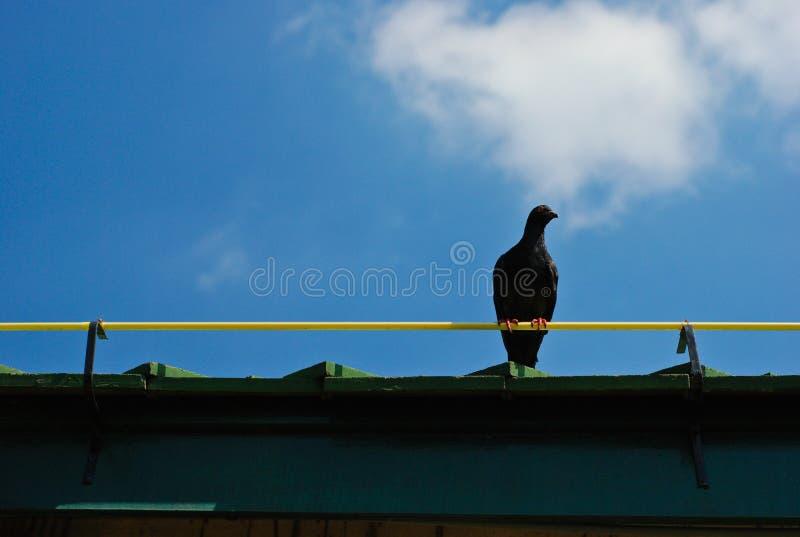 Waiting of one bird royalty free stock photo