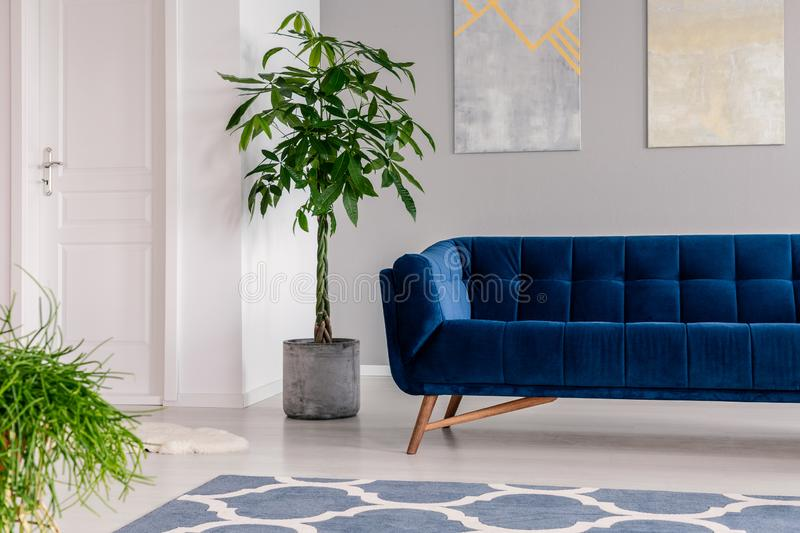 Waiting room interior in a luxurious clinic furnished with a velvet dark blue sofa, a rug and green plants. Real photo. stock photos