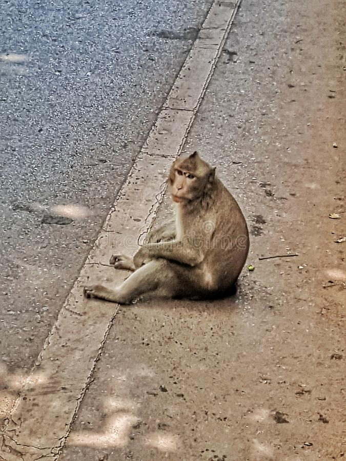Monkey look royalty free stock image
