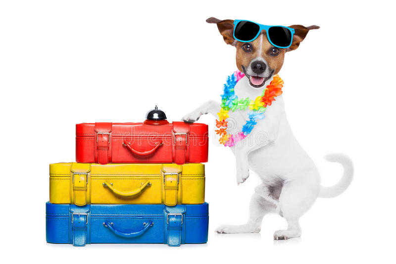Wakacje pies obrazy royalty free
