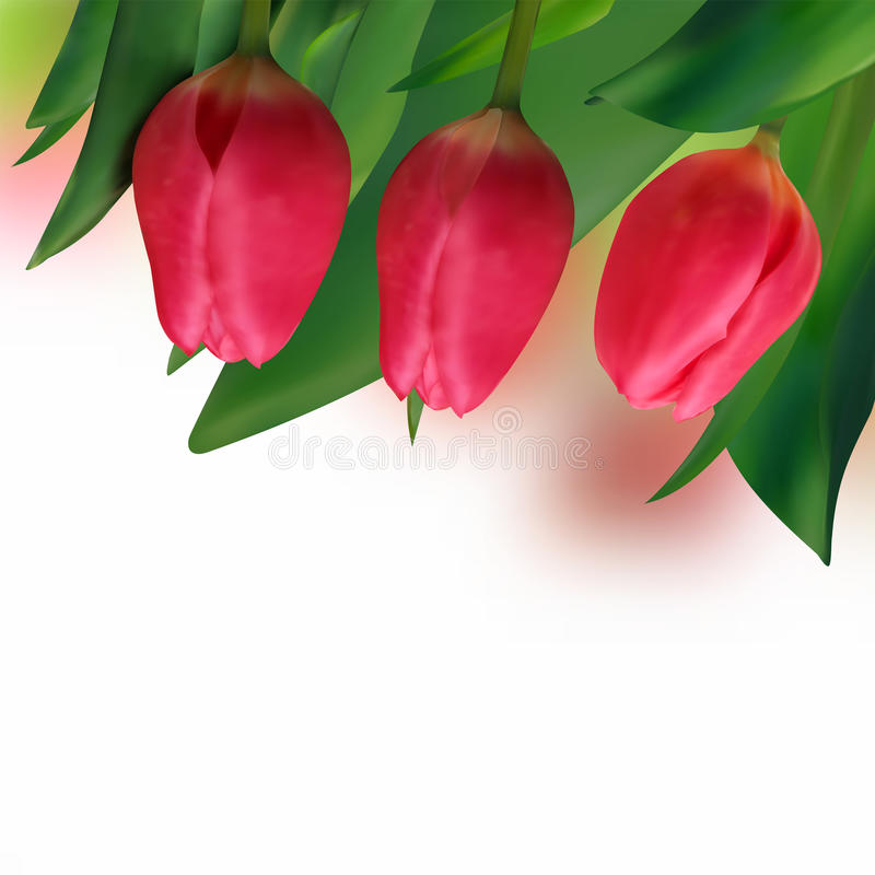 wakacyjny czerwonej wiosna tulipan ilustracji