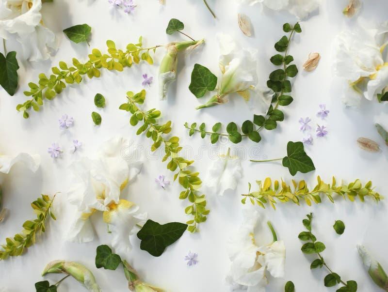 Wakacyjny kwiecisty wzór biały irys, pączki, małe purpury kwitnie zdjęcie royalty free