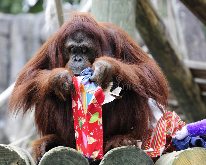 Wakacyjny Małpi biznes zdjęcia stock