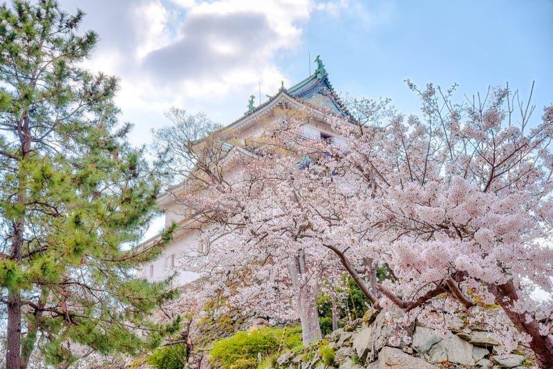 Wakayama-Schlossstellung auf dem H?gel mit Kirschbl?ten im foregound stockfoto