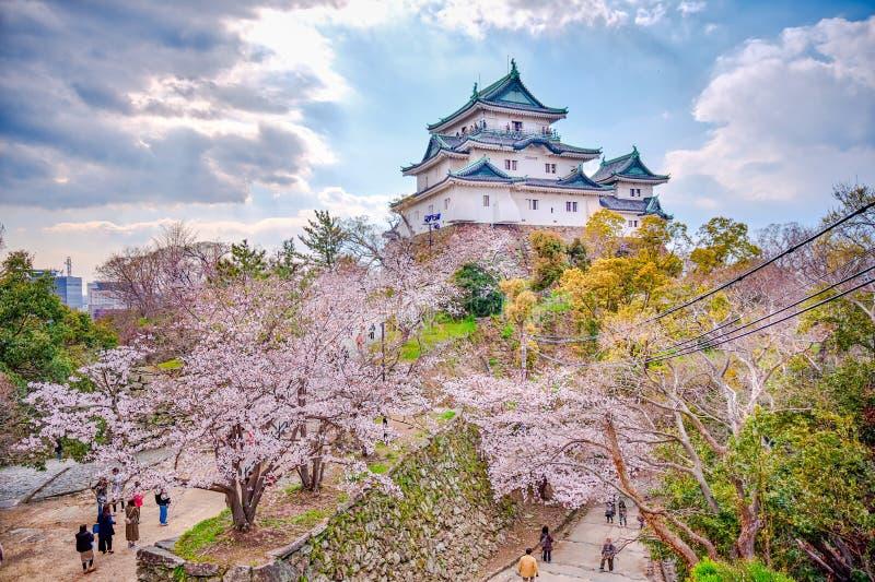 Wakayama-Schlossstellung auf dem H?gel mit Kirschbl?ten im foregound lizenzfreies stockfoto
