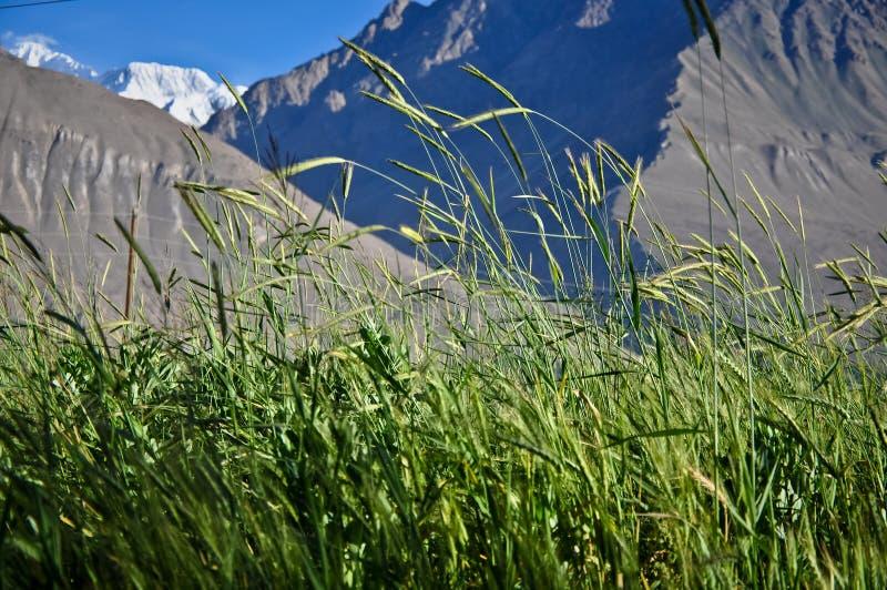 wakhan草甸的谷 免版税库存图片
