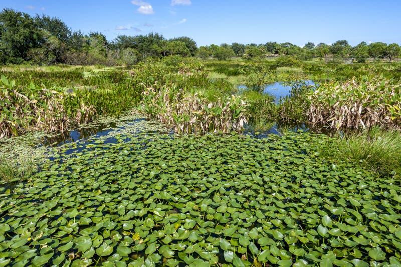 Wakodahatchee Wetlands in Delray Beach. Florida USA royalty free stock images