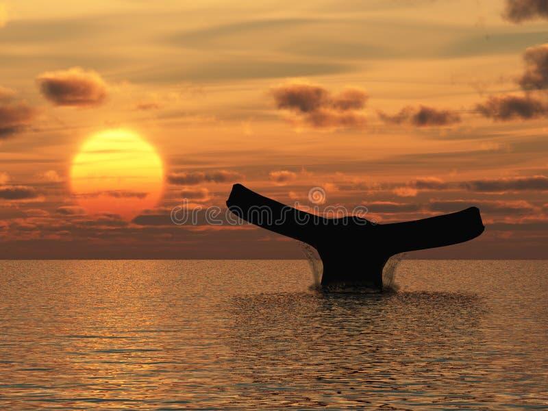 Wal stockbilder