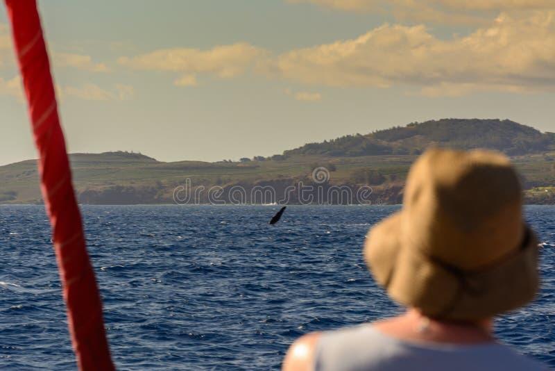 Wal-Aufpassen stockfoto