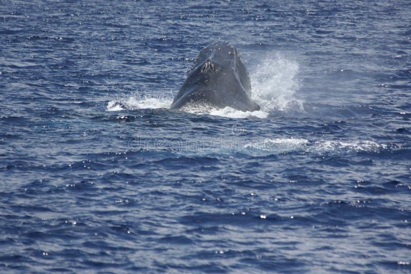 Wal-aufpassende Köpfe oben stockfotografie
