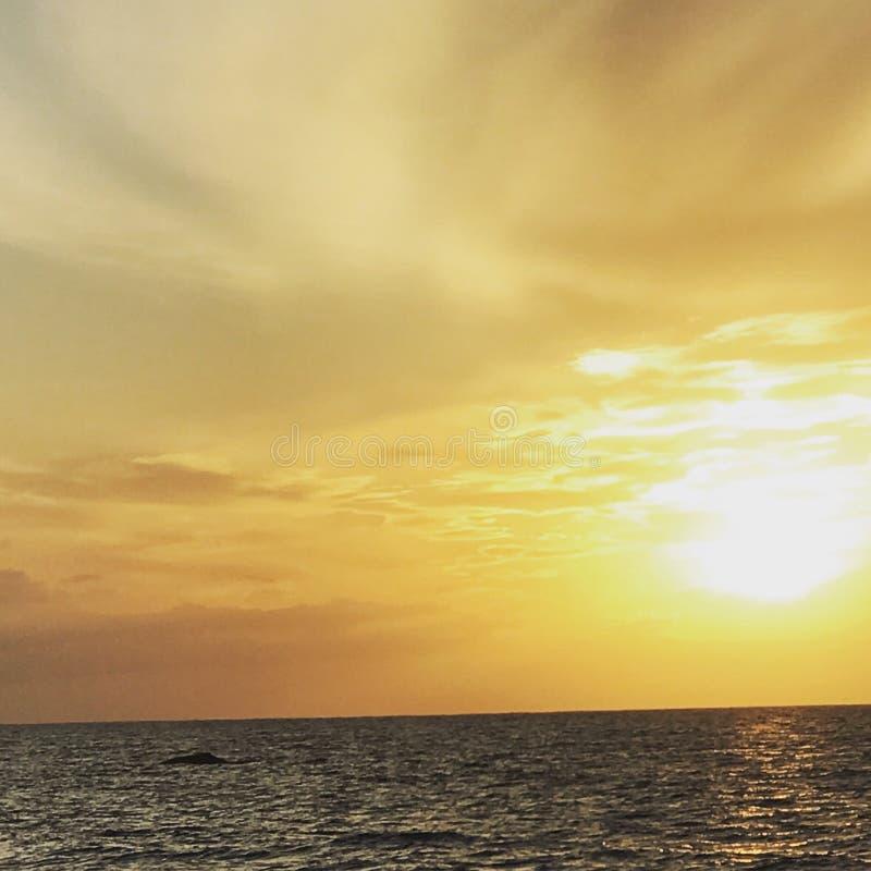Wal bei Sonnenuntergang in Hawaii stockbild
