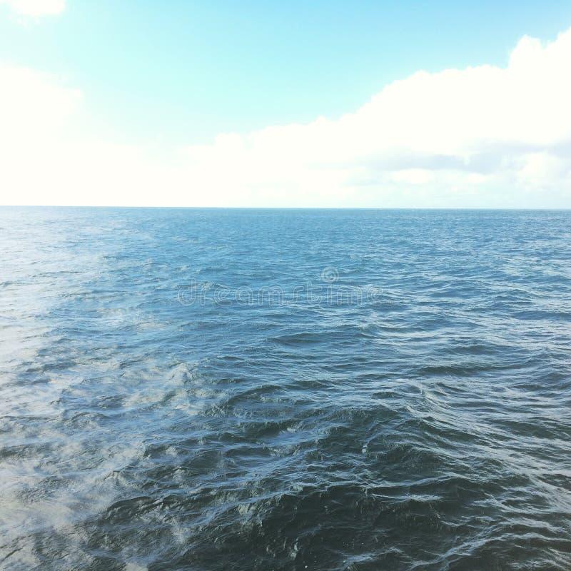 Wal, der in Hawaii aufpasst lizenzfreie stockfotografie