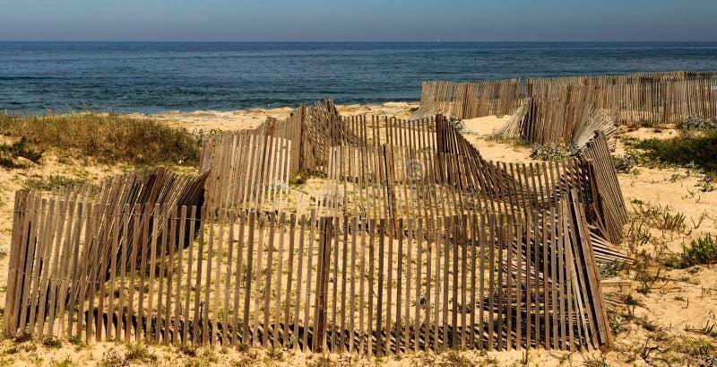 Wal pacifico alle dune di Espinho, Portogallo immagini stock