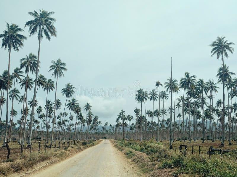 Walaranodorp, Malekula-Eiland/Vanuatu - 9 juli 2016: tropische kokosnotenaanplanting met een weg voor de koprauitvoer royalty-vrije stock foto