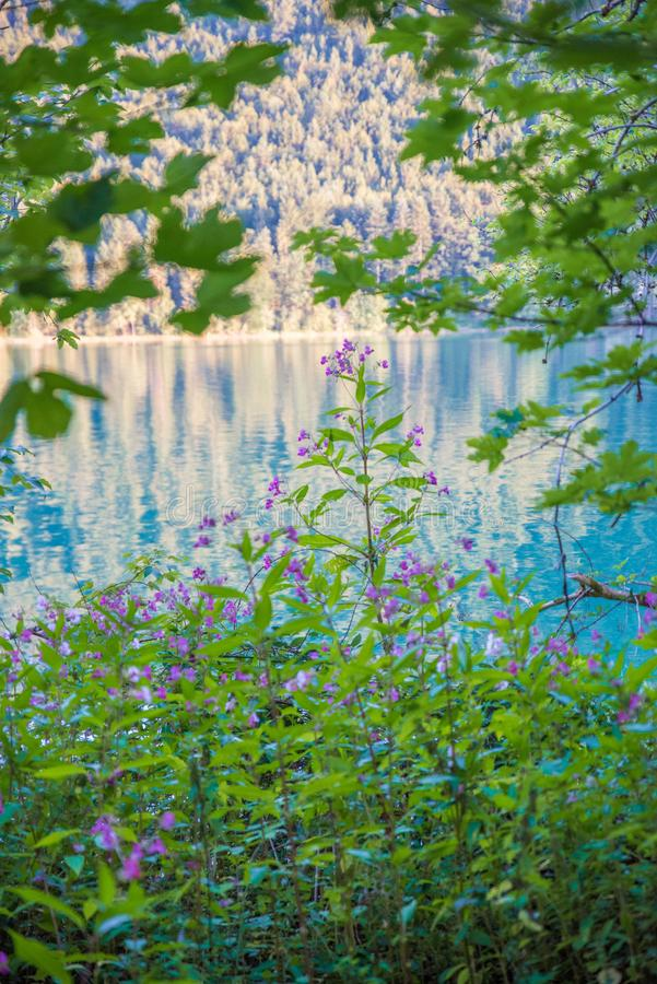 Landscape with lake royalty free stock photography