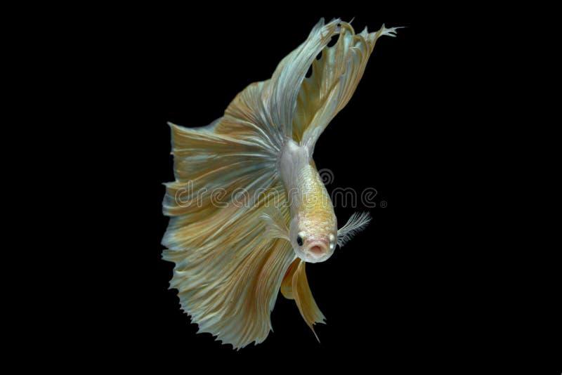 walcząca ryba obrazy stock