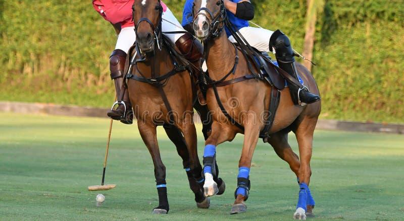 Walczyć z końskimi polo graczami w polo dopasowywa zdjęcia royalty free