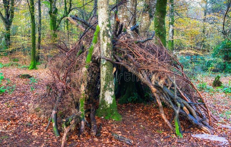 Waldüberlebens-Schutz stockbilder