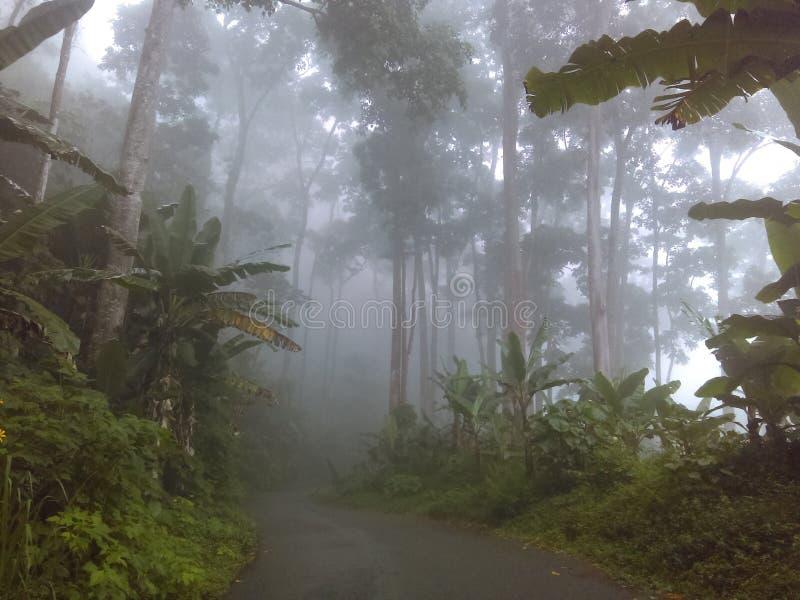 Wald 2 lizenzfreie stockfotos