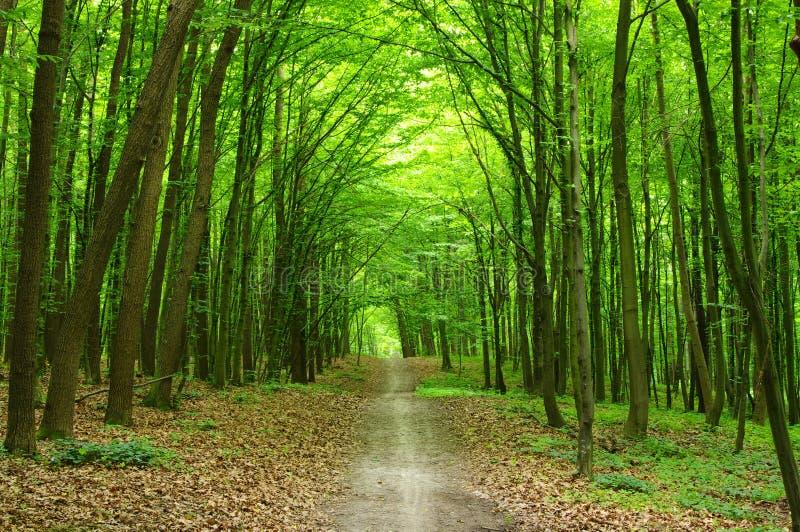 Download Wald stockfoto. Bild von landschaft, umgebung, schönheit - 12201262