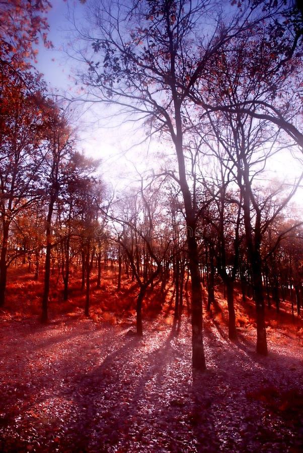Wald lizenzfreies stockfoto