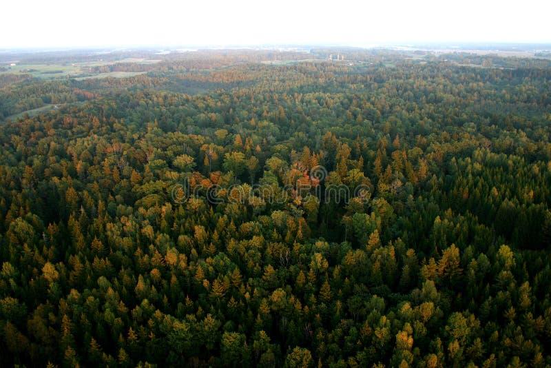 Wald lizenzfreie stockfotos