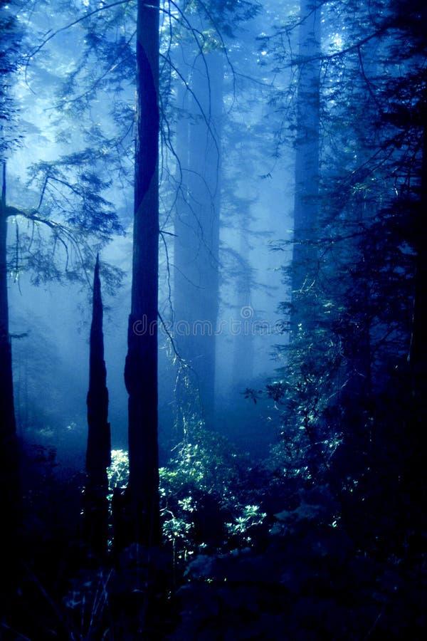 Download Wald stockbild. Bild von landschaften, oregon, blau, nave - 27069