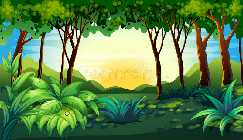 Wald stock abbildung
