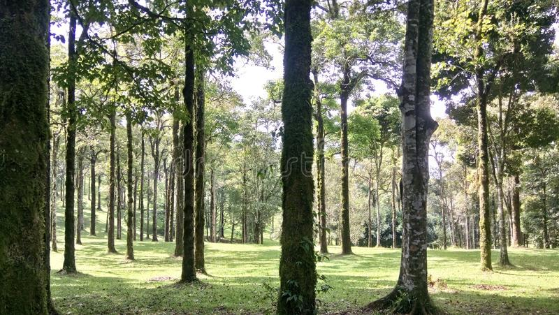 Wald? stockfotografie