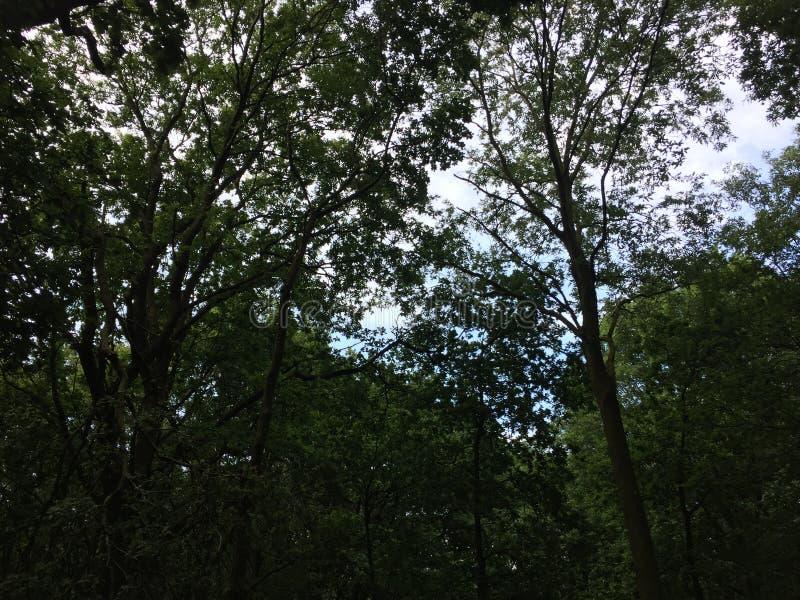 Download Wald stockfoto. Bild von blau, grün, bäume, himmel, wald - 96930358