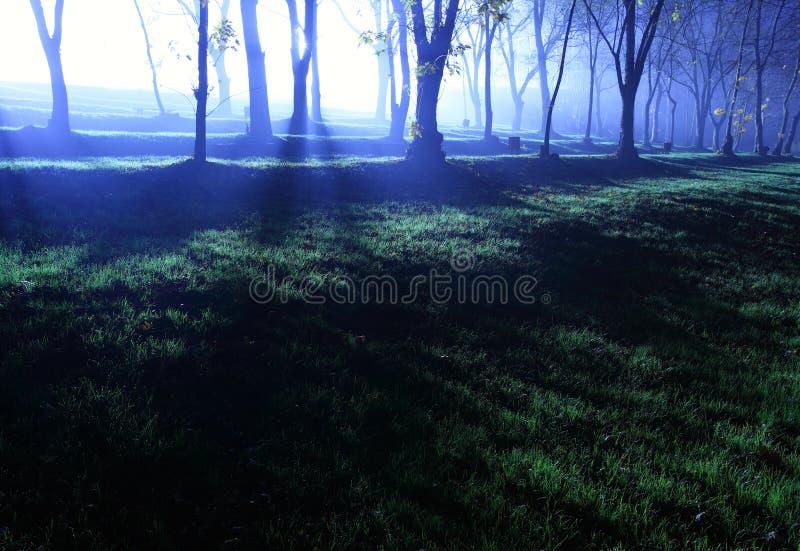 Wald am Abend lizenzfreies stockfoto