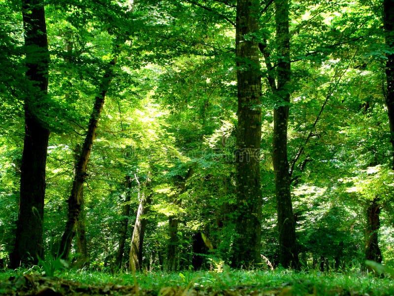 Wald, Aserbaidschan lizenzfreies stockbild