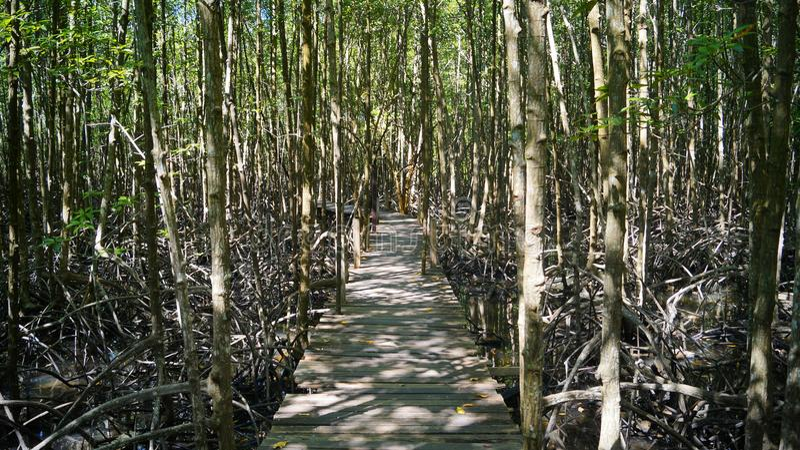 Wald auf dem Wasser lizenzfreies stockfoto