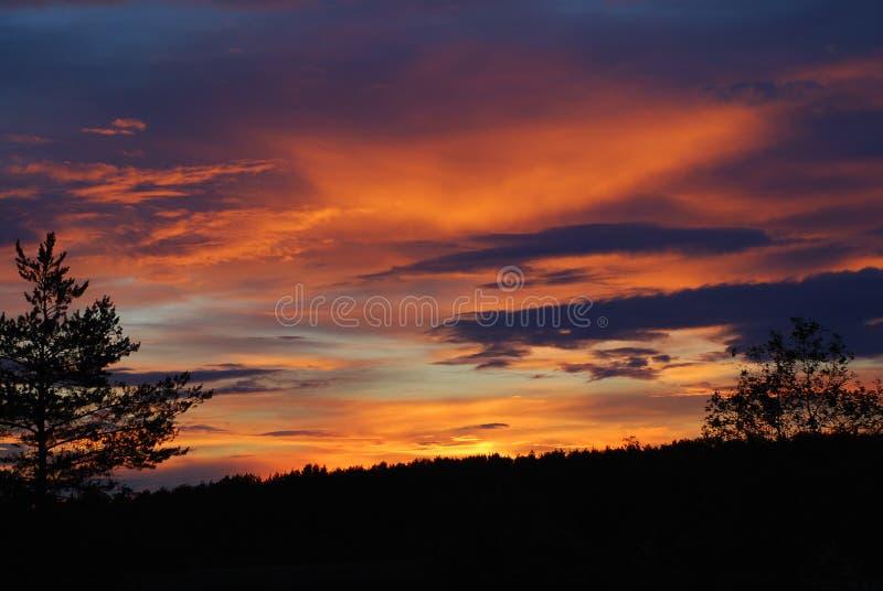 Wald auf Dunkelorange bewölkt Hintergrund stockbild