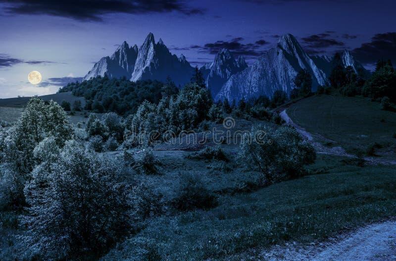 Wald auf grasartigem Abhang in den tatras nachts stockfoto