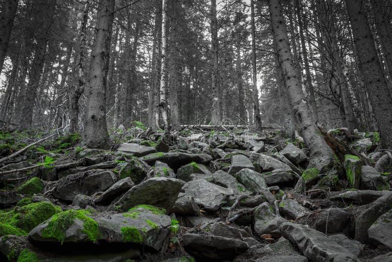 Wald auf Steinhügel stockfoto