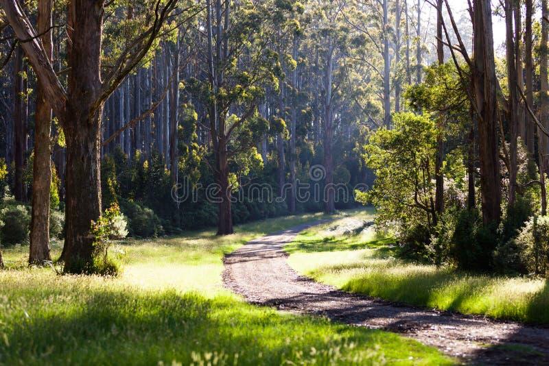 Wald in Australien stockbild