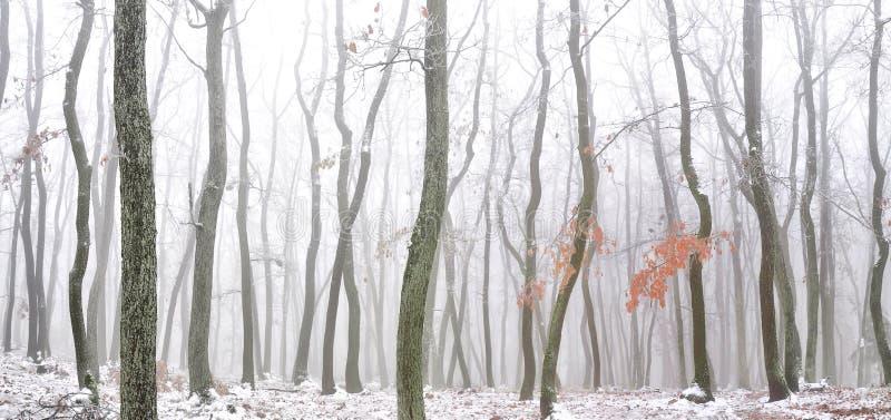 Wald bedeckt mit Glasureis stockfoto