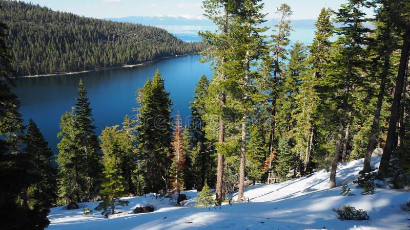 Wald bei Lake Tahoe stockfotos